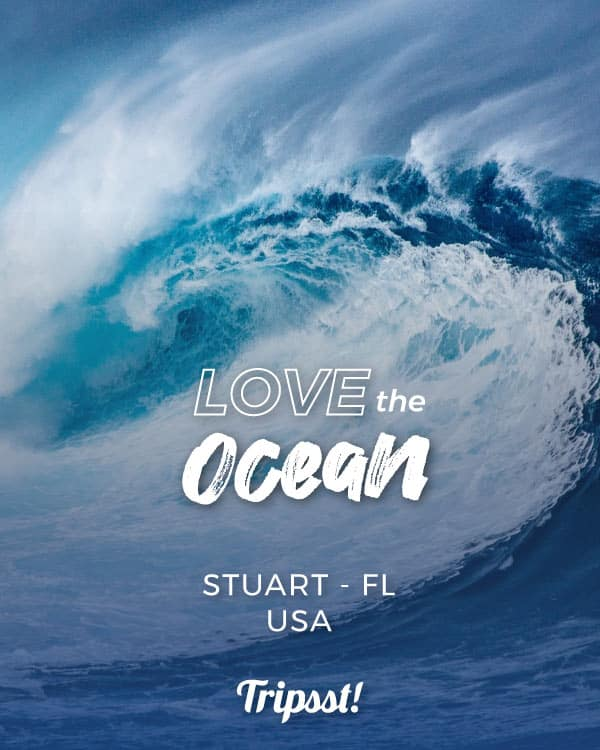 A blue wave forms in oceanic waters.