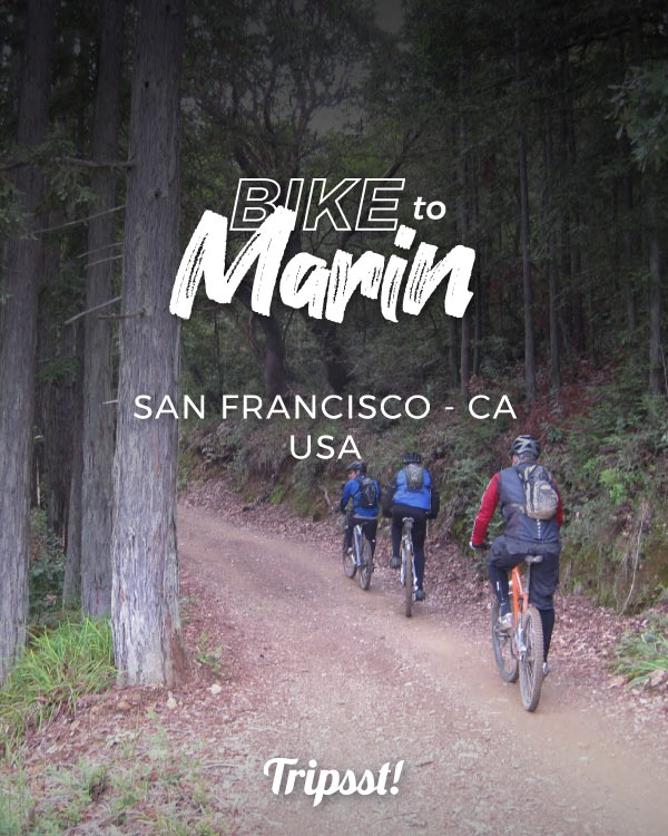 A group of bikers cycle up Mount Tamalpais through a fire trail