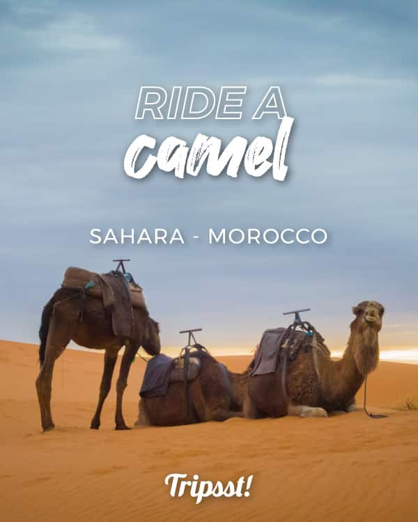 A camel in the middle of a dessert