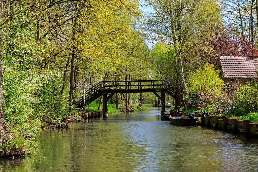 Sight of a quiet canal surrounded by tall trees, crossed by a wooden bridge