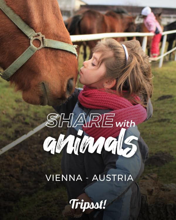 Girl kissing a horse in his muzzle
