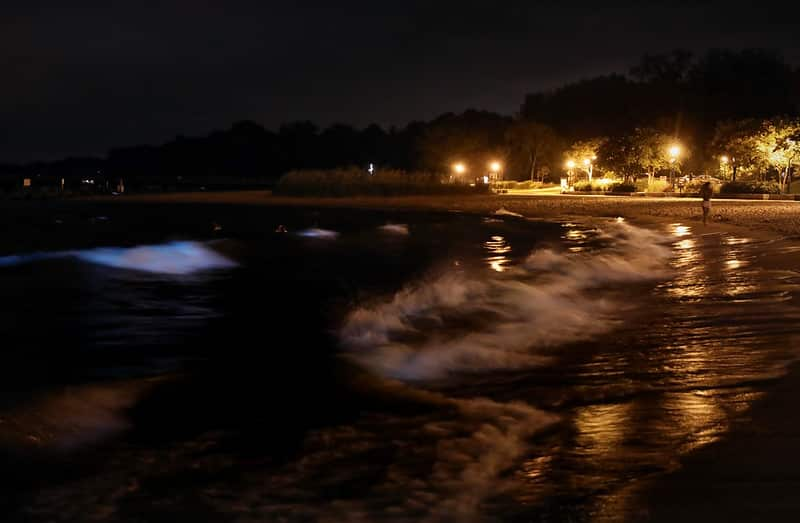 the waves move and the bioluminescence phenomenon is seen