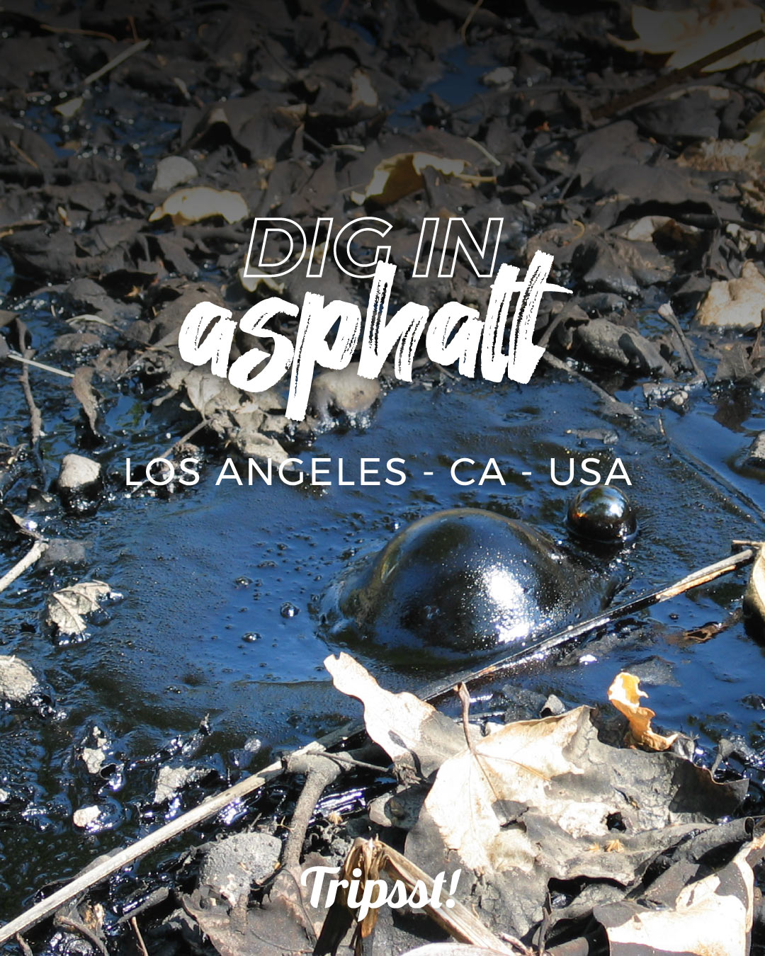 A tar pit, covered in dusty and dry leaves, with a bubble of asphalt in the center.