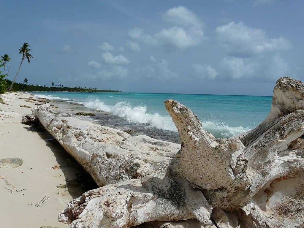 Dry white logs on a beach with turquoise waters.