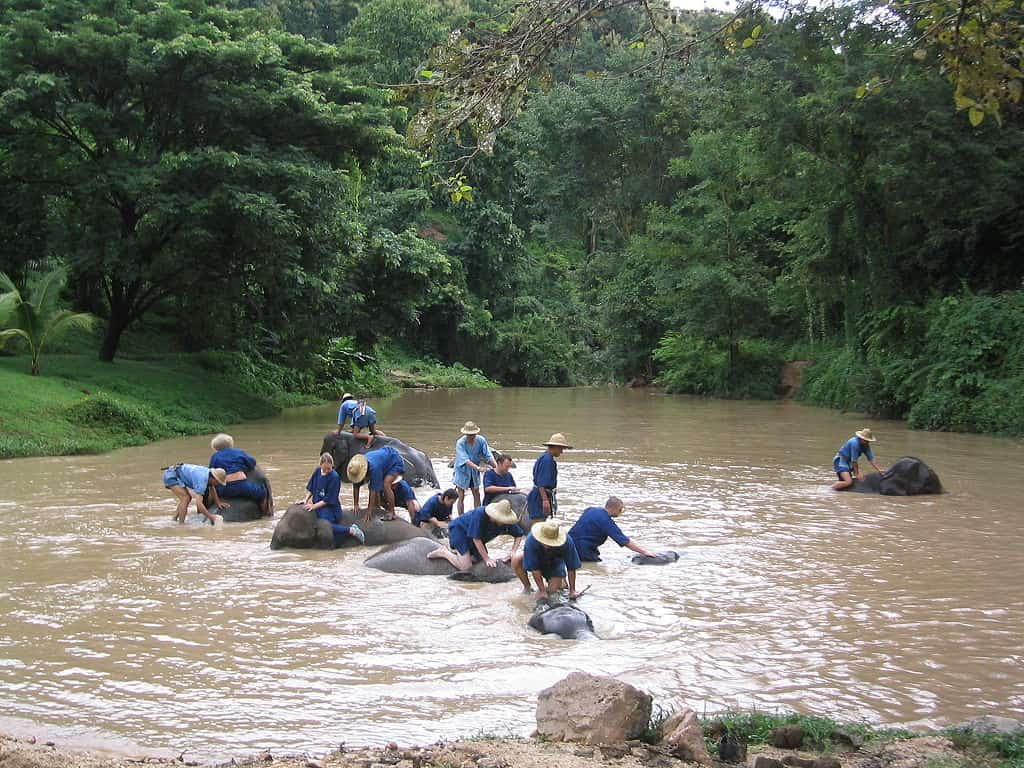 People dressed in blue are seen bathing a group of elephants in a river